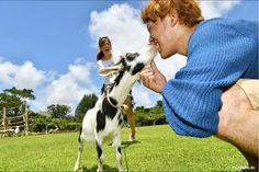 Touch and play with the animals!! #비오스의언덕 #물소 #마차 #염소 #오키나와명소 #비오스노오카 #japankuru #japan #cooljapan #okinawa #hillofbios #animals #family #沖繩 #沖繩旅行 #小動物 #療癒 #全家同樂