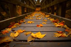 HD Autumn Leaves Wallpaper | Download Free - 59728