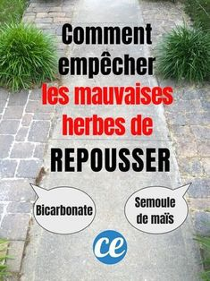 Comment Tuer les Mauvaises Herbes (Et EMPÊCHER Qu'elles Repoussent ! How to kill weeds (and prevent them from growing back!