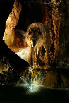Freedom for the wolf added a new photo — with Deyvid Gast and Ryan Burk. Wolf Images, Wolf Pictures, Anime Wolf, Beautiful Wolves, Animals Beautiful, Tier Wolf, Wolf Hybrid, Wolf Artwork, Fantasy Wolf