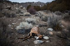 Severe Drought Has U.S. West Fearing Worst - NYTimes.com
