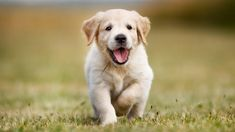 Researchers found a lower risk of cardiovascular disease in owners of dogs, especially hunting breeds.