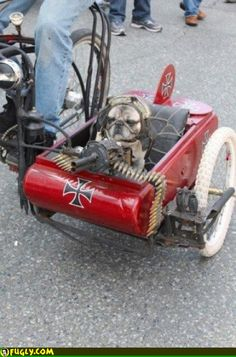 """Too awesome. """"Local Toronto artist MadDog with Yoda, his machine-gun toting Pug, in a Red Baron custom-built sidecar"""" Makes me miss my two pugs Animals And Pets, Funny Animals, Cute Animals, Morbider Humor, Funny Dogs, Cute Dogs, Amor Pug, Photo Chat, Harley"""