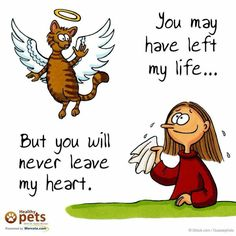 For our 3 wee girlies . Jenny, Kedi and Lacey . I Love Cats, Crazy Cats, Cute Cats, Cat Quotes, Animal Quotes, Gato Angel, Pet Dogs, Dog Cat, Pet Loss Grief