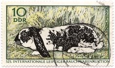 Stamp from East Germany! Rabbit postal stamp, German lop-eared rabbit