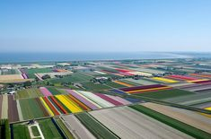 Image result for netherlands flower landscape above