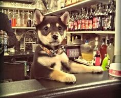 PetsLady's Pick: Cute Bartending Dog Of The Day ... see more at PetsLady.com ... The FUN site for Animal Lovers