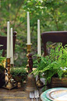 floriculture: ferns