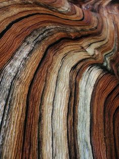 COLOUR SCHEME and texture :) . Such a gorgeous colorway. Also, think of alpaca yarn art imitating this wood grain! Patterns In Nature, Textures Patterns, Color Patterns, Nature Pattern, Color Schemes, 3d Pattern, Beautiful Patterns, Foto Macro, Fotografia Macro