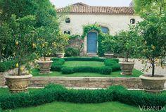 potted+lemon+trees+in+french+garden.jpg (564×380)