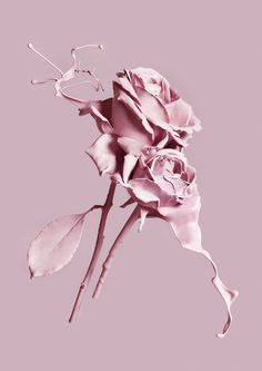 Pink roses aesthetic wallpapers, pink aesthetic, everything pink, wallpaper b Tumblr Wallpaper, Flower Wallpaper, Wallpaper Backgrounds, Iphone Wallpaper, Pastel Wallpaper, Screen Wallpaper, Aesthetic Roses, Aesthetic Pastel, Purple Aesthetic