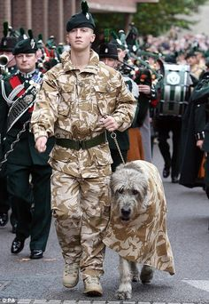A soldier and Irish wolfhound Brian Boru VIII led the parade as Irish Guards marched through their  hometown in Market Drayton, Shropshire.   The battalion had just completed a six-month tour of duty in Afghanistan's Helmand Province, October 2008.