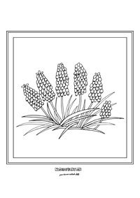 Modrica - jarné kvietky Flower Coloring Pages, Colouring Pages, Flower Wall Design, Jar, Teacher, Autumn, Spring, Drawings, Flowers