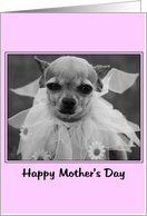 funny chihuahua dog friends birthday Card by Greeting Card Universe. $3.00. 5 x 7 inch premium quality folded paper greeting card. Birthday cards & photo Birthday cards from Greeting Card Universe will bring a smile to your loved ones' face. Show your loved ones you care with a custom paper card to celebrate their birthday. Turn to Greeting Card Universe for all your birthday card needs. This paper card includes the following themes: friends, humorous, and funny. Set your birthda...