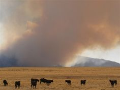 'Double barrel' of wind, dry air feeds wildfires - http://uptotheminutenews.net/2013/06/20/top-news-stories/double-barrel-of-wind-dry-air-feeds-wildfires/