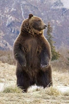 29 Ideas for nature photography wildlife grizzly bears Nature Animals, Animals And Pets, Cute Animals, Wild Animals, Baby Animals, Wildlife Photography, Animal Photography, Beautiful Creatures, Animals Beautiful