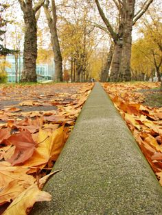 The leaves in Autumn line Memorial Way. #youW