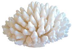 "White Coral Specimen 10"" x 10"" x 5""H ($249.00)  $149.00 OneKingsLane.com"