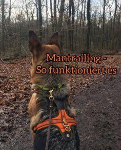 Vor ungefähr einem Jahr haben Queen und ich mit dem Mantrailing angefangen. Von Anfang an hat es uns beiden eine Menge Spaß bereitet und ich bin froh, eine Hundesport gefunden zu haben, der genau zu Queen passt. Daher möchte ich euch heute erzählen, was genau hinter dem Mantrailing steckt, wie man das Training aufbaut und ...