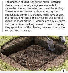 Vegetable Garden, Garden Plants, Useful Life Hacks, Dream Garden, Things To Know, Farm Life, Horticulture, Lawn And Garden, Garden Projects