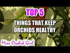 """""""How to water orchids"""" 