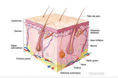 Ácido hialurónico - Cara - Labios - Gluteos - Clinicas Vicario