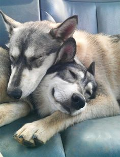 """We absolutely love it when we see animal best friends hanging out together, and these adorable dog buddies are no different. We value dogs, as """"man's best friend,"""" for the relationships they form with us, but they're social animals that are perfectly capable of finding friends among their own kind as well! Like humans,dogs have …"""