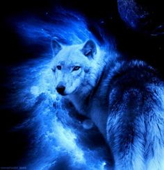 beautiful wolf and moon pictures Beautiful Creatures, Animals Beautiful, Cute Animals, Native American Pictures, Native American Indians, Native Americans, Wolf Spirit Animal, Wolf Wallpaper, Wolf Pictures