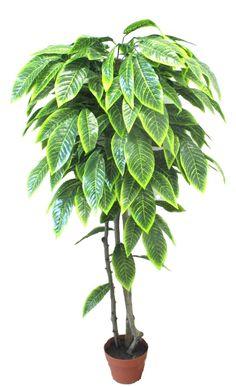 Plant Leaves, Plants, Plant, Planets