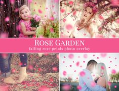 "Petal photo overlays ""Rose Garden"", falling pink rose petals photo overlay, Valentine's Day atmosphere, photo overlays for Photoshop"
