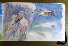 Alessandro Sacchetti - Wildlife Painter: Gheppio all'Isola d'Elba, Monte Serra
