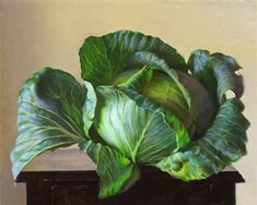 Jeffrey T Larson - oil painting realistic cabbage on black table, close-up, green, botanical but not, still life Still Life Drawing, Painting Still Life, Still Life Art, Hyper Realistic Paintings, Fruit Painting, Wow Art, Photorealism, Botanical Art, Painting Inspiration