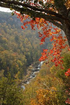 Autumn in Alabama: Little River Canyon puts on its colors for the season (photos) #fall #outdoors #camping