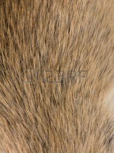 Mouse fur