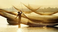 Golden net Photo by Ly Hoang Long -- National Geographic Your Shot