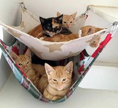 Cat hammock can be one of the best pleasurable furniture for your cats. Find the most creative cat hammock that will make more comfort unpredictably. I Love Cats, Crazy Cats, Cool Cats, Diy Cat Hammock, Gatos Cool, Cat Room, Here Kitty Kitty, Kitty Cats, Cats Bus