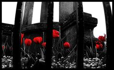 A random shot taken in Bath. The black & white with the contrasting red flowers made it a lot more dramatic than the original. ~ By Chor Ip