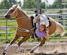 heartland horses | ... Stormy (who plays Spartan ), one of John Scott's many, many horses