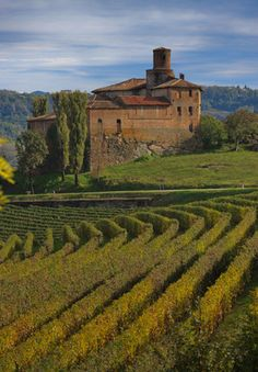 Langhe, province of Cuneo, region of Piedmont, Italy