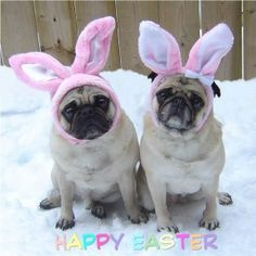 Easter Pugs