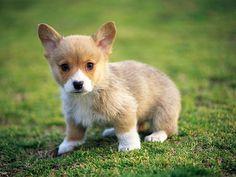 puppy so, cute!