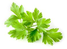 French Gingerbread Hints and Tips Tuesday Parsley, Gingerbread, Herbs, Fruit, Food, Guide, Tuesday, Healing, French