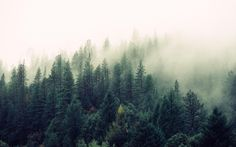 Eind dit jaar vindt de cruciale klimaattop in Parijs plaats. Met de tergend langzame vooruitgangrond de beperking van CO2-emissies in het achterhoofd, besloten wetenschappersvan Oxford Universityom in een rapport deeffecten te vergelijken vantechnologieën dieCO2 uit de lucht halen. En watblijkt volgens de vorsers de meest veelbelovende'technologie'? Juist ja: de conclusie is dat van alle onderzochte … Lees verder Bomen zijn beste 'technologie' tegen klimaatverandering →