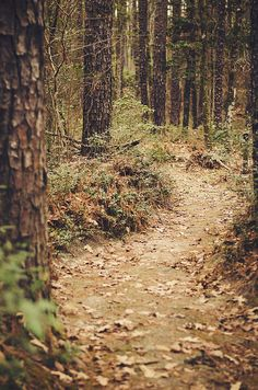 A walk in the woods - Longleaf Vista Trail, Kisatchie National Forest, Louisiana, hiking in the wilderness