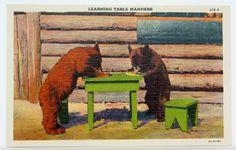 Animal Postcards Maine Bears Humorous Logs Cabin Woods Vintage ephemera Souvenir