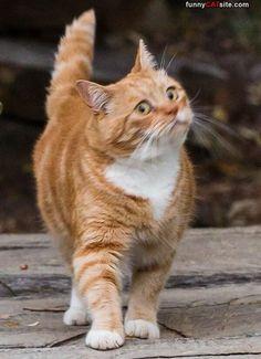 Do Not Cross This Line - funnycatsite.com#cats #funny #cute