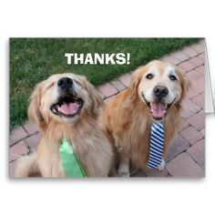 Golden Retriever Thank You Cards by #AugieDoggyStore. Sold 10 copies to a customer in Morgantown, WV