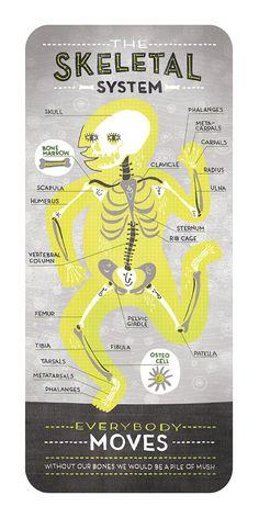 The Skeletal System: Anatomy Print