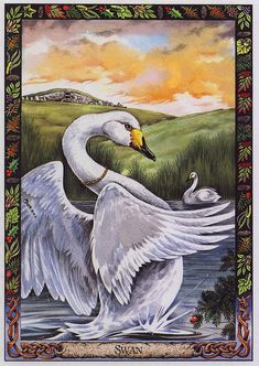 Druid Animal Oracle Deck by Bill Worthington | LRS - The Druid Animal Oracle] Painted by Bill Worthington, Swan ...