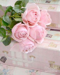 MARIA BONITA — Roses